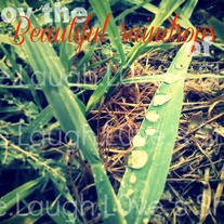 Enjoy the beautiful raindrops of life 5x7 print - 3