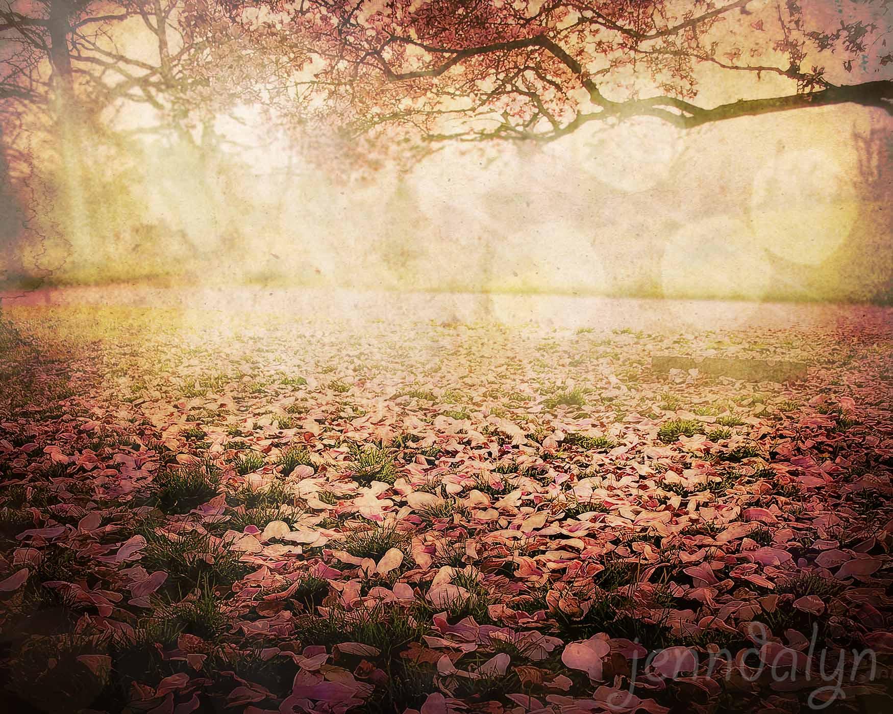 I Awoke In A Dream - 8 x 10 fine art photograph, spring landscape ...