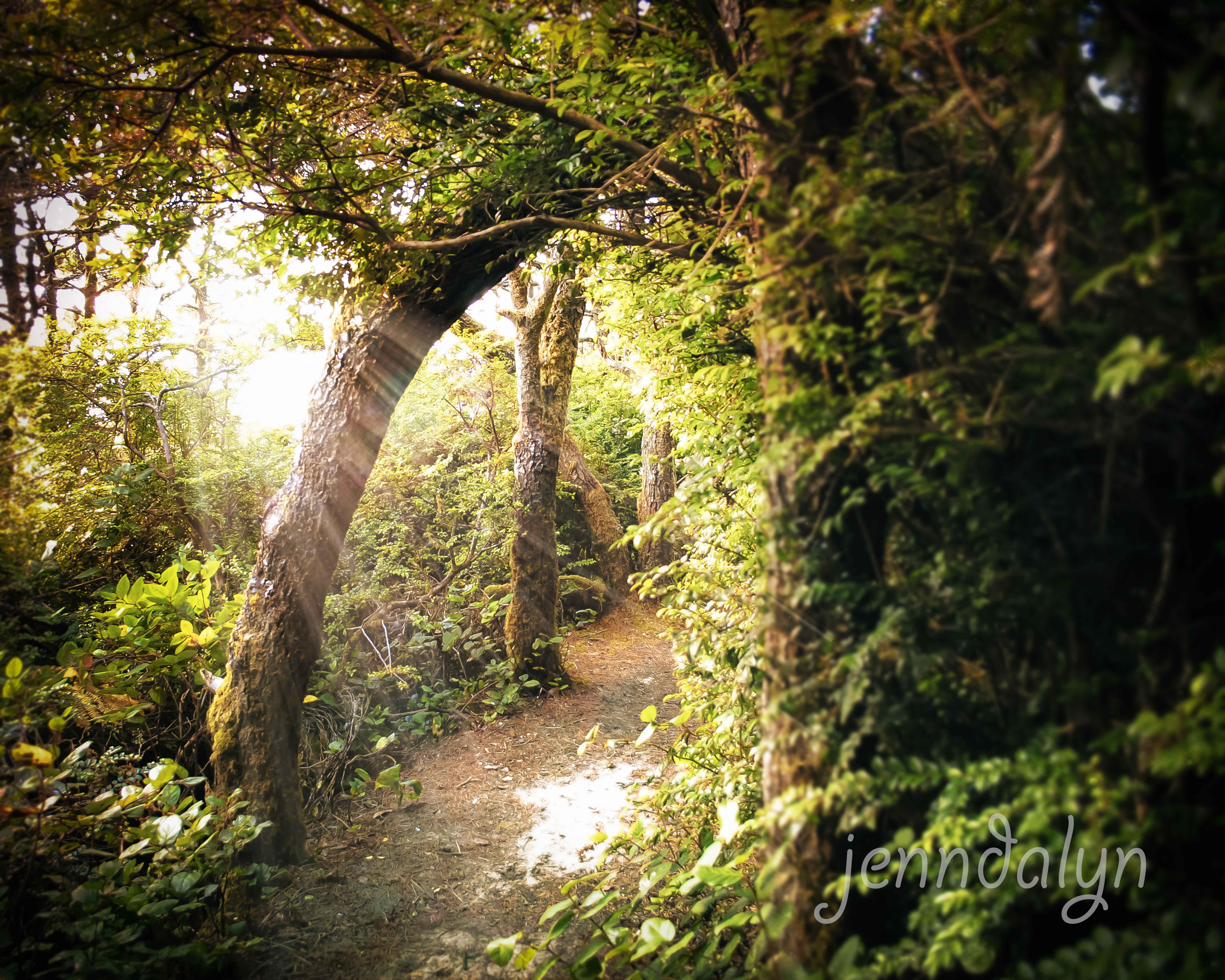 Sunlit Path 8 X 10 Fine Art Photograph Enchanted Forest