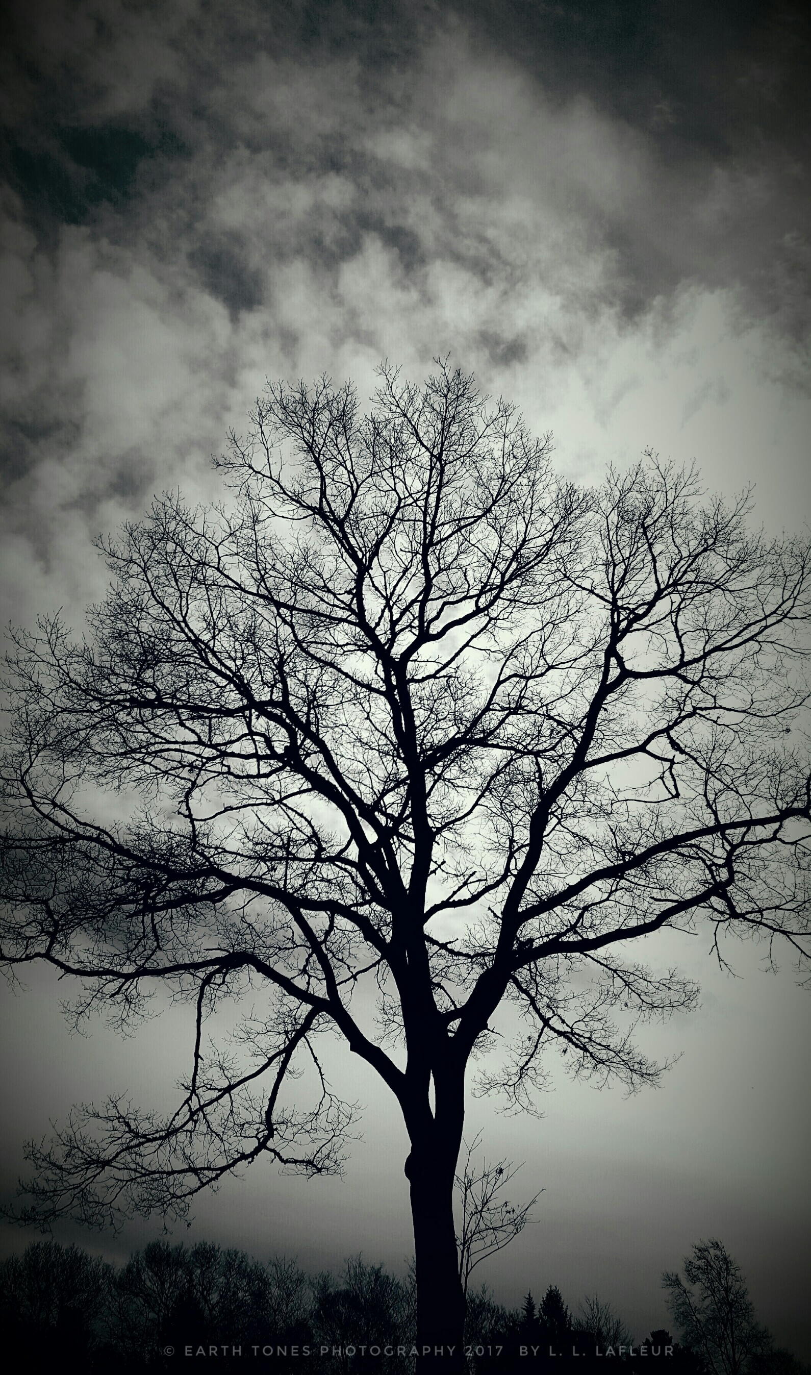 Tree silhouette photo art black white from earth tones photography