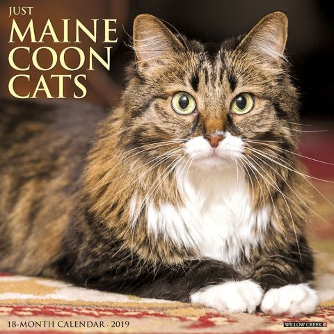 2019 Willow Creek Just Maine Coon Cats Wall Calendar sold by Arizona Maine  Coon Cat Rescue