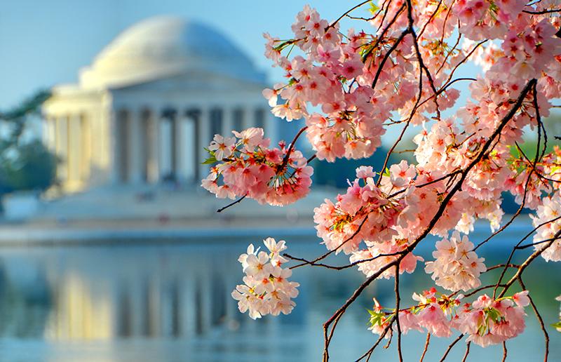 Caryn Esplin Photodesign Cherry Blossoms Jefferson