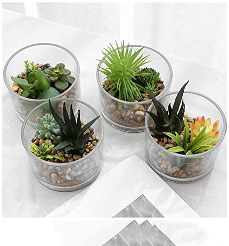 Artificial Succulent Plants Fake Succulents Glass Pot Clear Cup Container Great For Home And Office Decor Business Gifts 4 3 X 3 15 Style 3