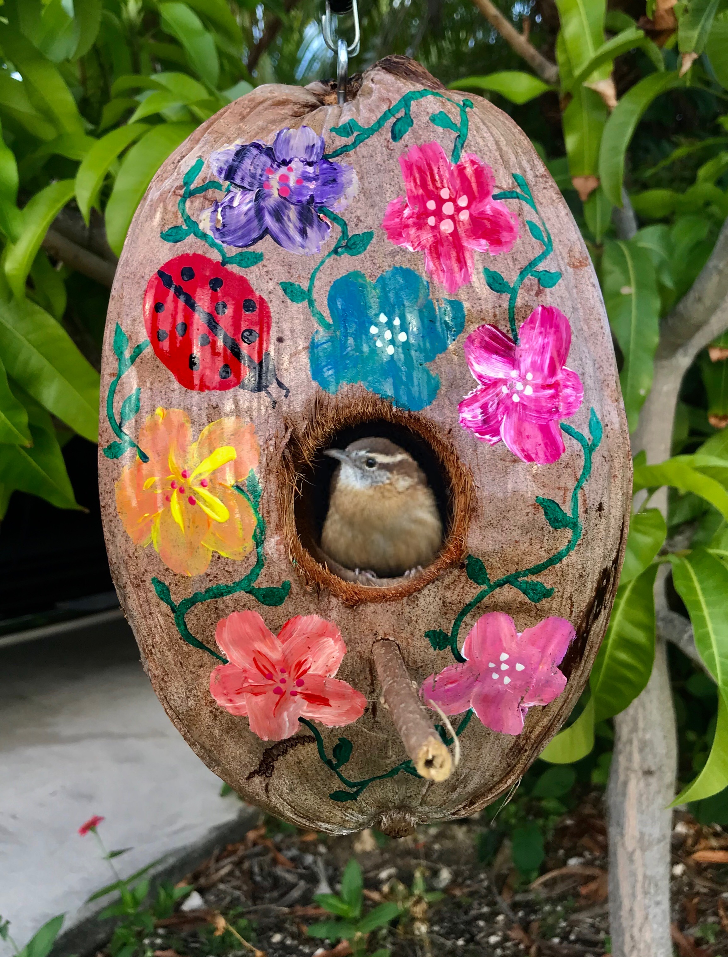 Beautiful painted coconut birdhouse